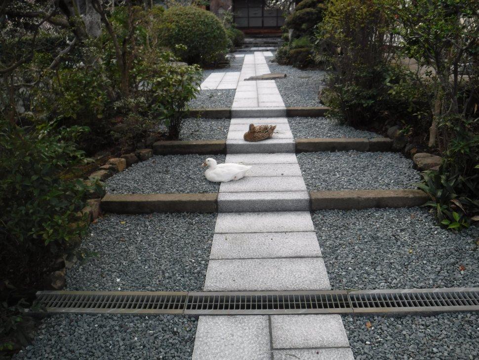 徳願寺参道